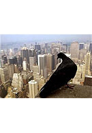Pollution to be monitored by pigeons, equipped with mobile phone