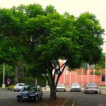 Cell phone and Wi-Fi networks affecting trees in urban areas, study finds