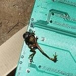Frog is determined to be the cause for Telstra's service disruption