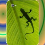 Samsung Germany is providing free custom body skins to buyers of the Galaxy Tab