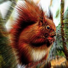 Scotland uses SMS crowdsourcing to track squirrel populations