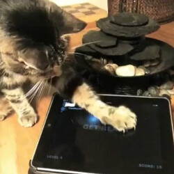 Friskies launches three tablet games... for cats