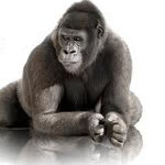 Corning reduces sales forecats for Gorilla Glass due to weak sales from non-iPad tablets