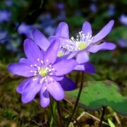 Nokia 808 PureView video captures the beauty of Finnish spring