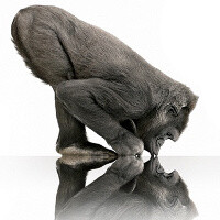 Corning Gorilla Glass is now on more than a billion devices