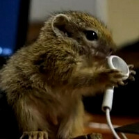 Ain't that cute? Baby squirrel thinks old Apple headphones are nuts (video)