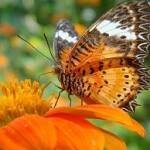 HTC Butterfly 2, HTC Butterfly J 2 revealed from OTA test?