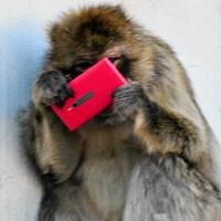 Monkeying around with the Nokia Lumia 800