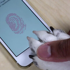 Nipple, toe and paw: 5 alternative ways to hack Touch ID and unlock the iPhone 5s