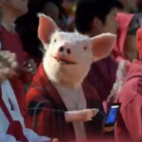 Instead of reinstating its Windows Phone app, Geico edits the pig's phone