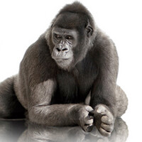 Corning introduces 3D shaped Gorilla Glass