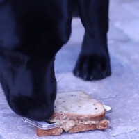Peanut Butter and dog make for a strange test of the Samsung Galaxy S5's IP67 certification