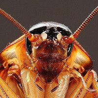 Is that an iPhone, or is it a…cockroach?