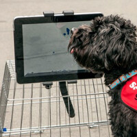 Class teaches dogs how to use tablets