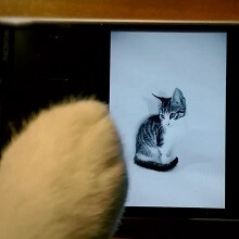 It's not really the internet without cats: Lumia fan wins #SMWCreative contest with a cute little video shot with a Lumia 930