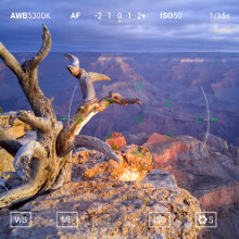 Poll results: Do you use the manual controls of your phone camera app?
