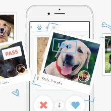 Tindog app is Tinder... for dog owners