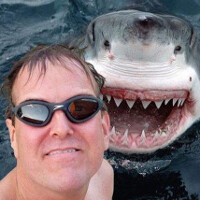 Warning: Selfies kill more people than sharks do (graphic)