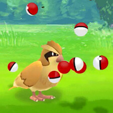 Wasted 10 balls on a Pidgey?! Niantic promises Pokemon Go update bug fix