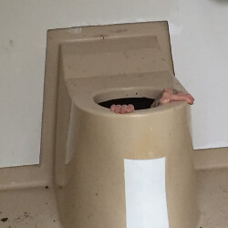 Norweigan man gets stuck in a public toilet trying to save his friend's phone