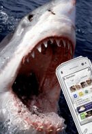 SMS being used to track great white sharks prowling beaches
