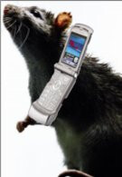 Cell phone radiation can be used to combat Alzheimer's disease?