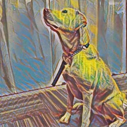 All aboard the painting app train: Google is making its own Prisma competitor, samples inside!