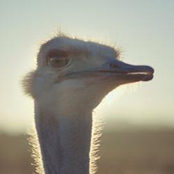 Samsung's ostrich ad just got seven awards at a major trade festival