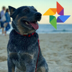 Google Photos getting even better for pet lovers