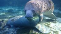 Sony-Xperia-Z1S-underwater-photos-1