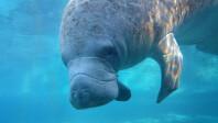 Sony-Xperia-Z1S-underwater-photos-4