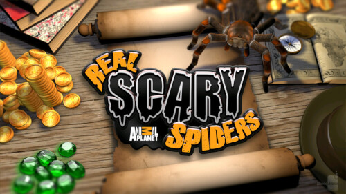 Afraid of spiders? Then don't play Animal Planet's Real Scary Spiders game