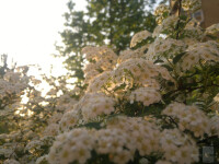 Best-smartphone-camera-photos-8102