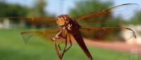 Best-smartphone-camera-photos-8603