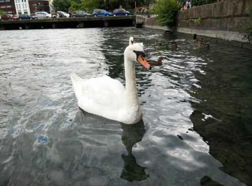 Highlights #2, the whites of a swan: JPEG