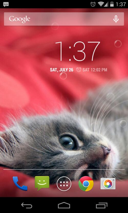 Lazy Cats Live