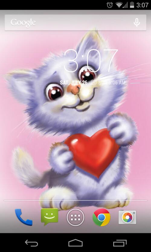 Funny Cute Cat Live