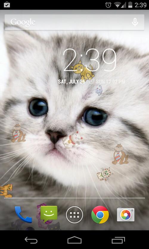 Kitty Cat Live