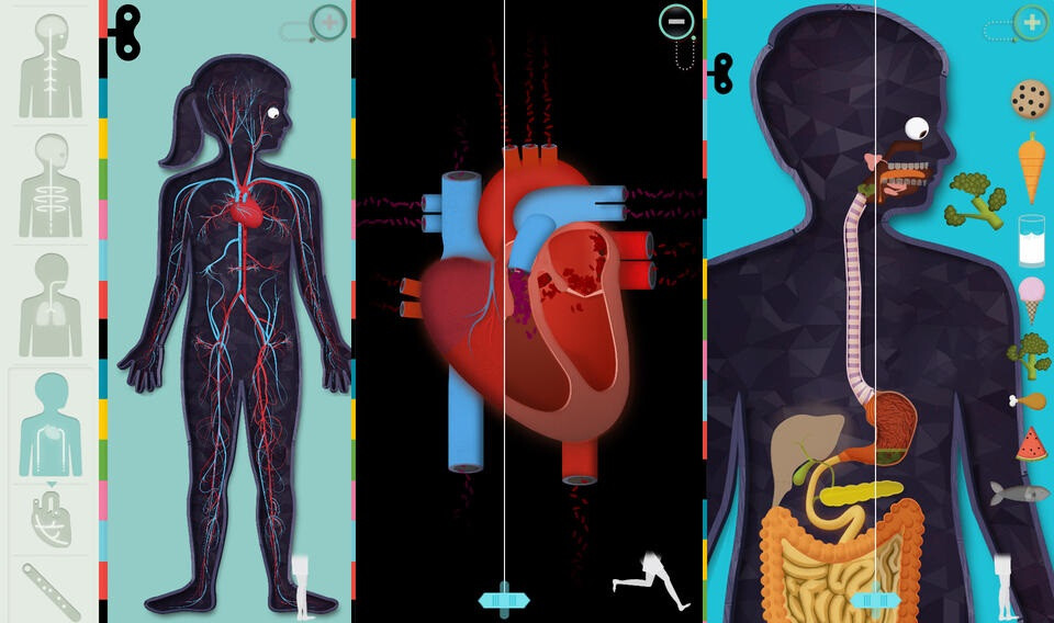 Charmant Ipad Anatomie App Fotos - Menschliche Anatomie Bilder ...