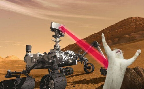 Curiosity might have killed the cat, but not us: here's what all the other options do