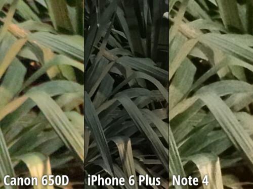 100% zoom crop