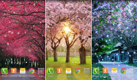 Sakura-Live-Wallpaper