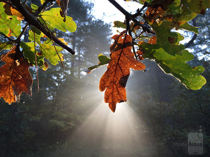 Last time's winner - Frank Rooimans - Apple iPhone 6The sun let the fall shine - 10 great images captured with smartphones #108