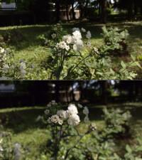 Control Auto shot (top) vs Bokeh mode (bottom)