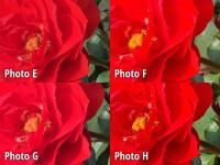 crop4-labeled.jpg