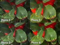 crop5-labeled.jpg