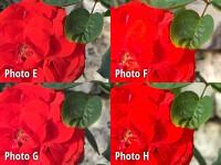 crop6-labeled.jpg