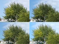 crop10-labeled.jpg