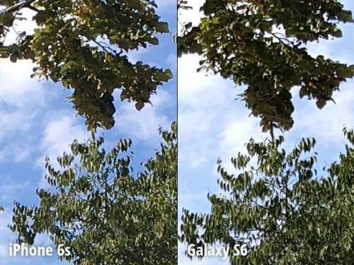 Scene 1 - Crops at 100% zoom