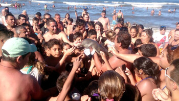 Death by selfie: baby dolphin dies when too many tourists grab it for a snap